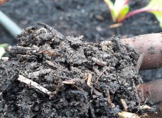 En automne, on observe et on prend soin de son sol !