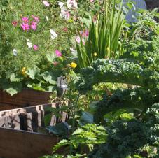 Biodiversité au jardin comestible