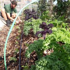 L'agriculture urbaine ça fonctionne !