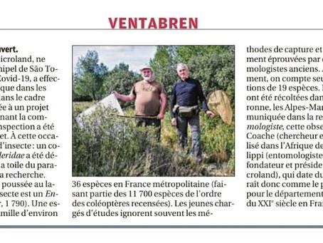La nouvelle observation du Cléride Enoplium serraticorne par Microland dans la Provence !