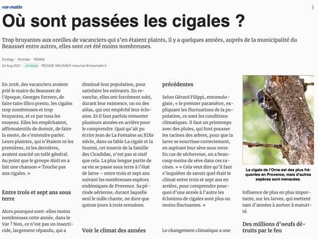 Reportage sur les cigales de notre région avec Gérard Filippi, pour le journal Var Matin