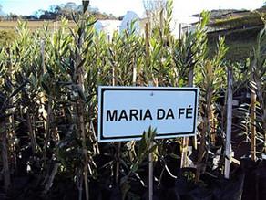 Maria da Fé – MG #lugarzinhos