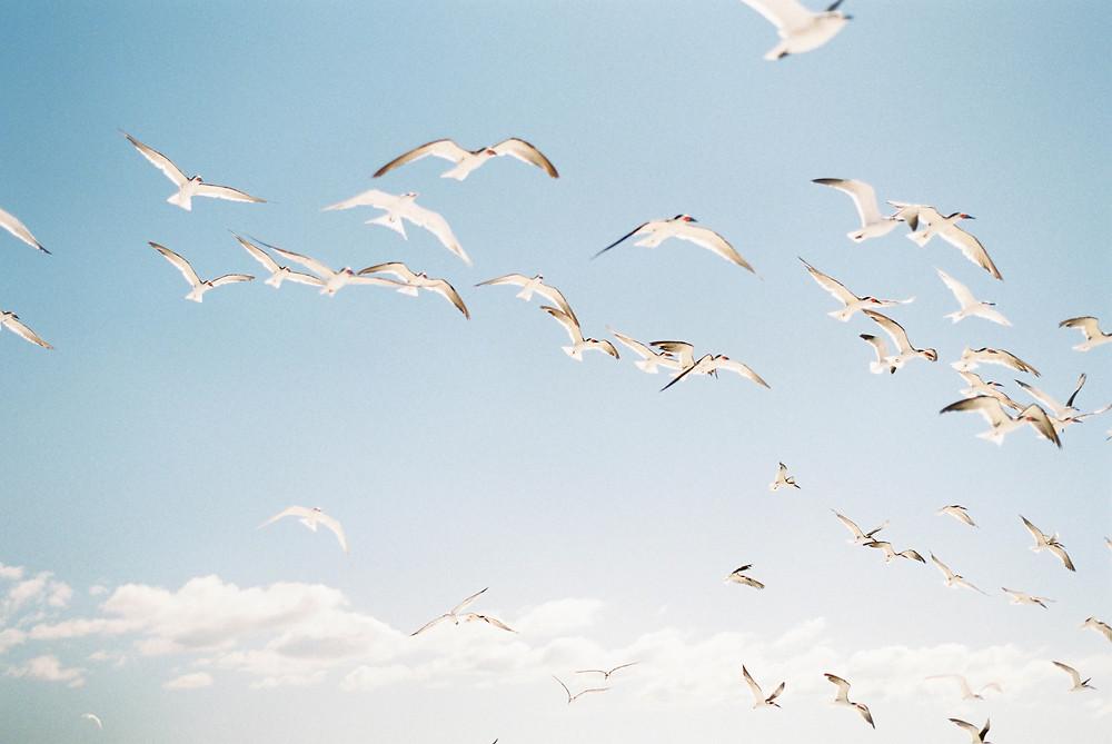 seagull bird print