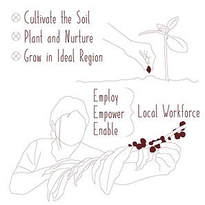 Infographic_Number_2b_Harvest.png