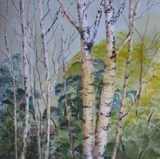 Birch Woods by Marilyn Flanagan