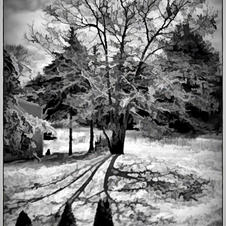 Shadows of the Winter Moon by Craig Snapp