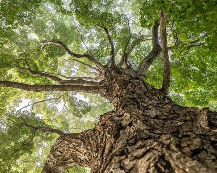 Tree Hug by Nancy Greindl