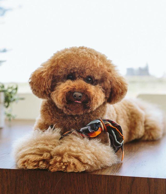 Dog Sitting Perth