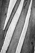 Авторская фотография для интерьера, черно-белая, абстракция, деревья, природа, рассуждение