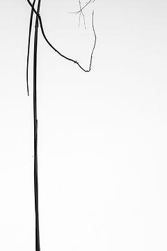 Авторская фотография для интерьера, черно-белая, абстракция, деревья, природа, введение