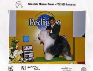 Claudio Pelligrini Handler Profesional 1
