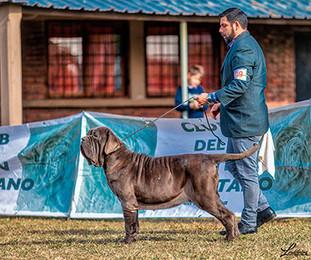 Gastón Oliva (BONO) Handler Argentino 01