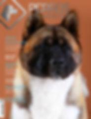 Ravista Nº 13 Perros en Acción