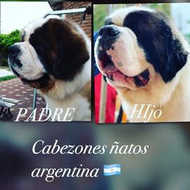 Criadero_Cabezones_Ñatos_08.jpg
