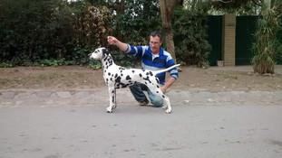 Criadero Docta Spotty 06.jpg