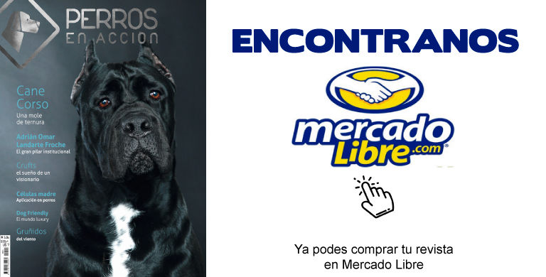 Mercado-Libre-14.jpg