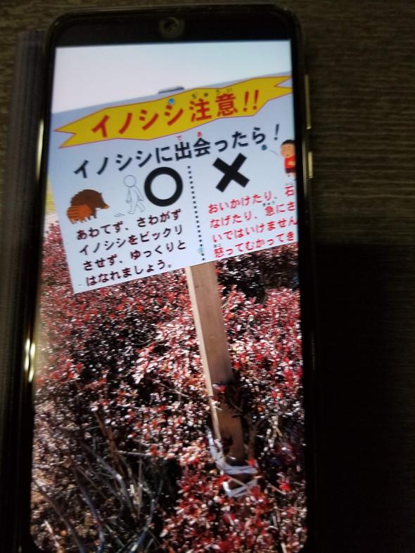 🐗千駄塚地区にイノシシ出没