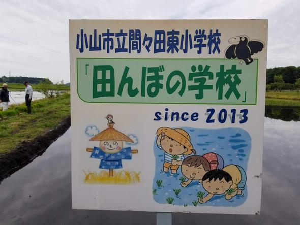 🌱田んぼの学校by間々田東小学校