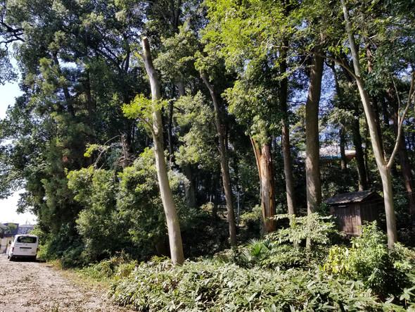 🌲倒木の恐れや電線にかかる木の調査
