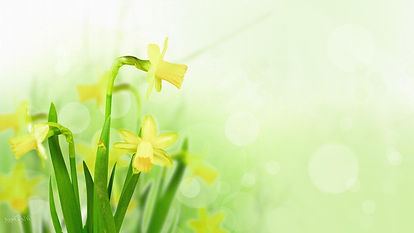 Daffodil-Background_edited.jpg