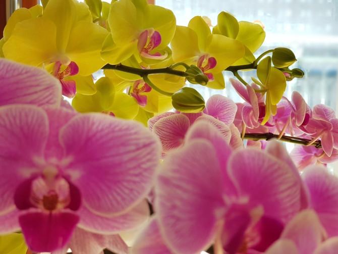 겨울에도 꽃은 피고 봄은 온다
