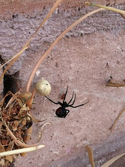 black-widow-175488__340