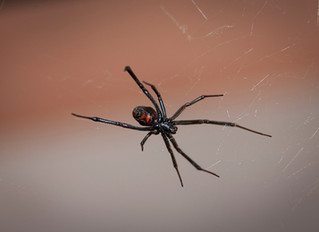 Black Widow...What my nightmares are made of!