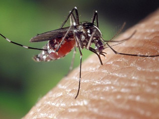 Deadliest Animal on Earth!  10 Facts about Mosquitoes