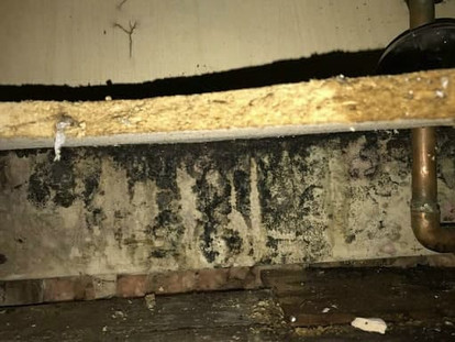 Mold Can Grow Faster Due to The Pandemic