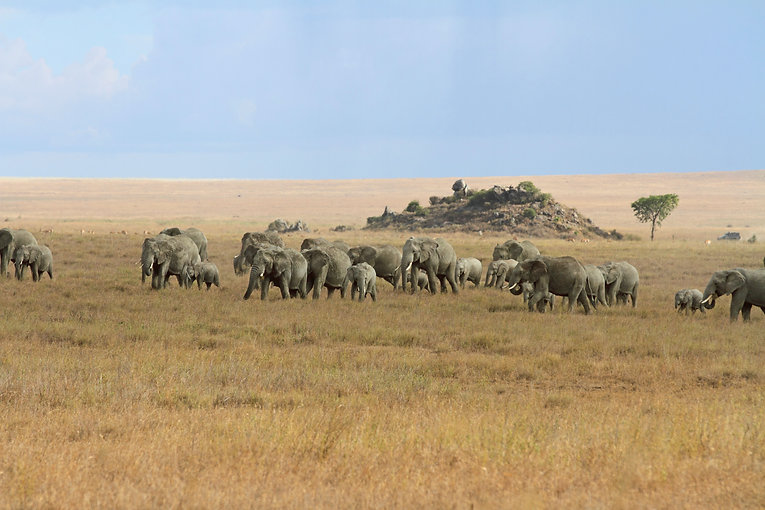 01 Serengeti Elephants-833.jpg