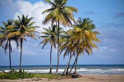 Caribbean shore