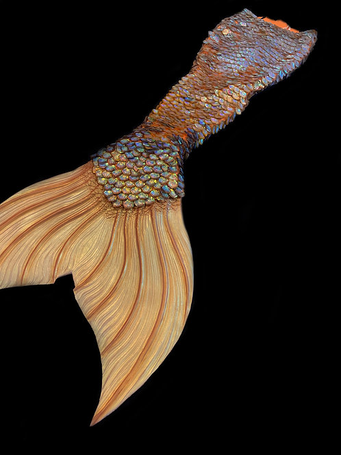 Gold Scale Tail