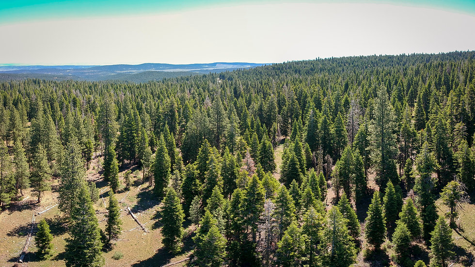 0.84 Acres in Beautiful Northern California!