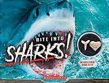 bite into sharks 11.jpg