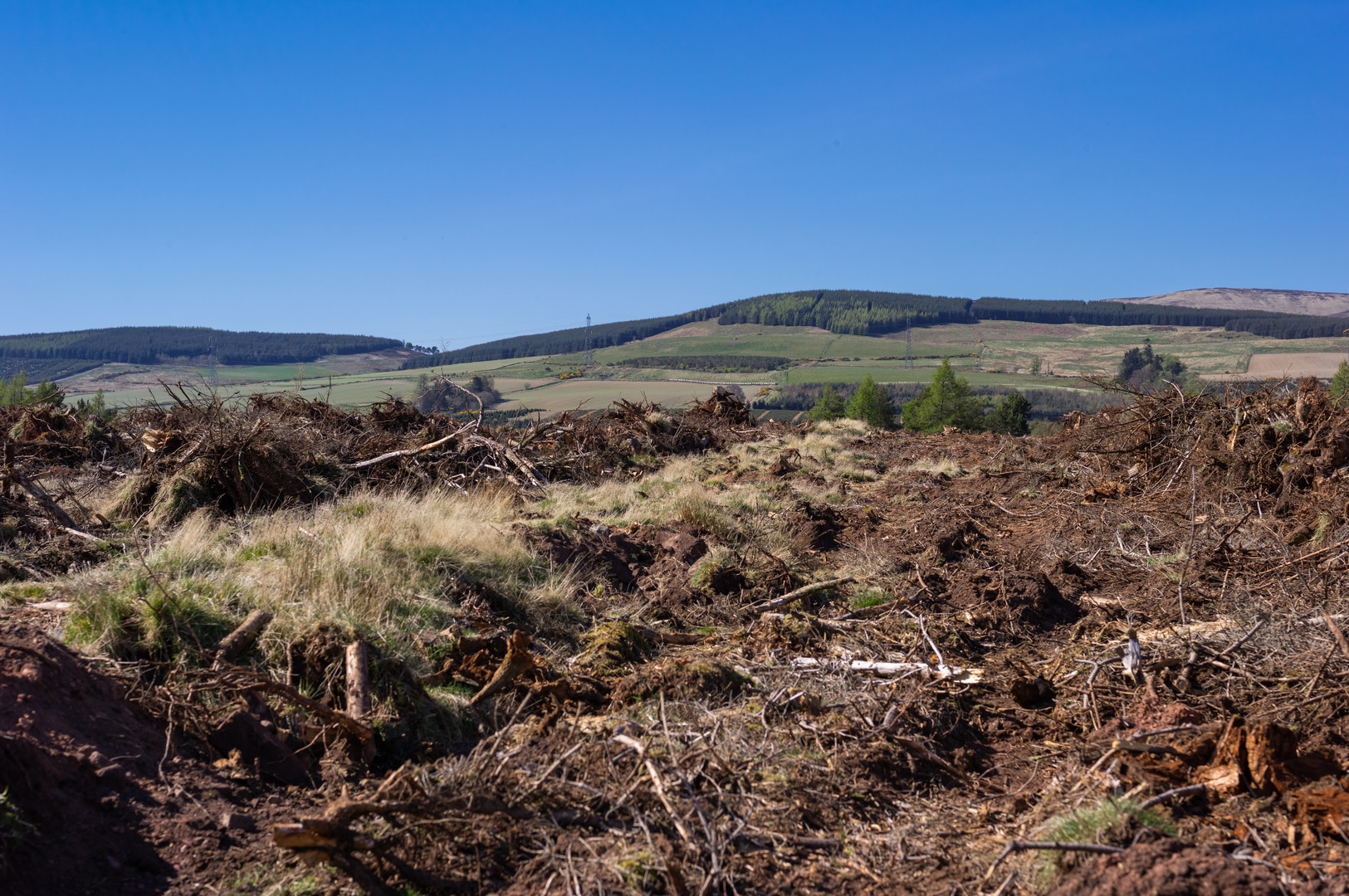 Wood clearing Fasque-14.jpg