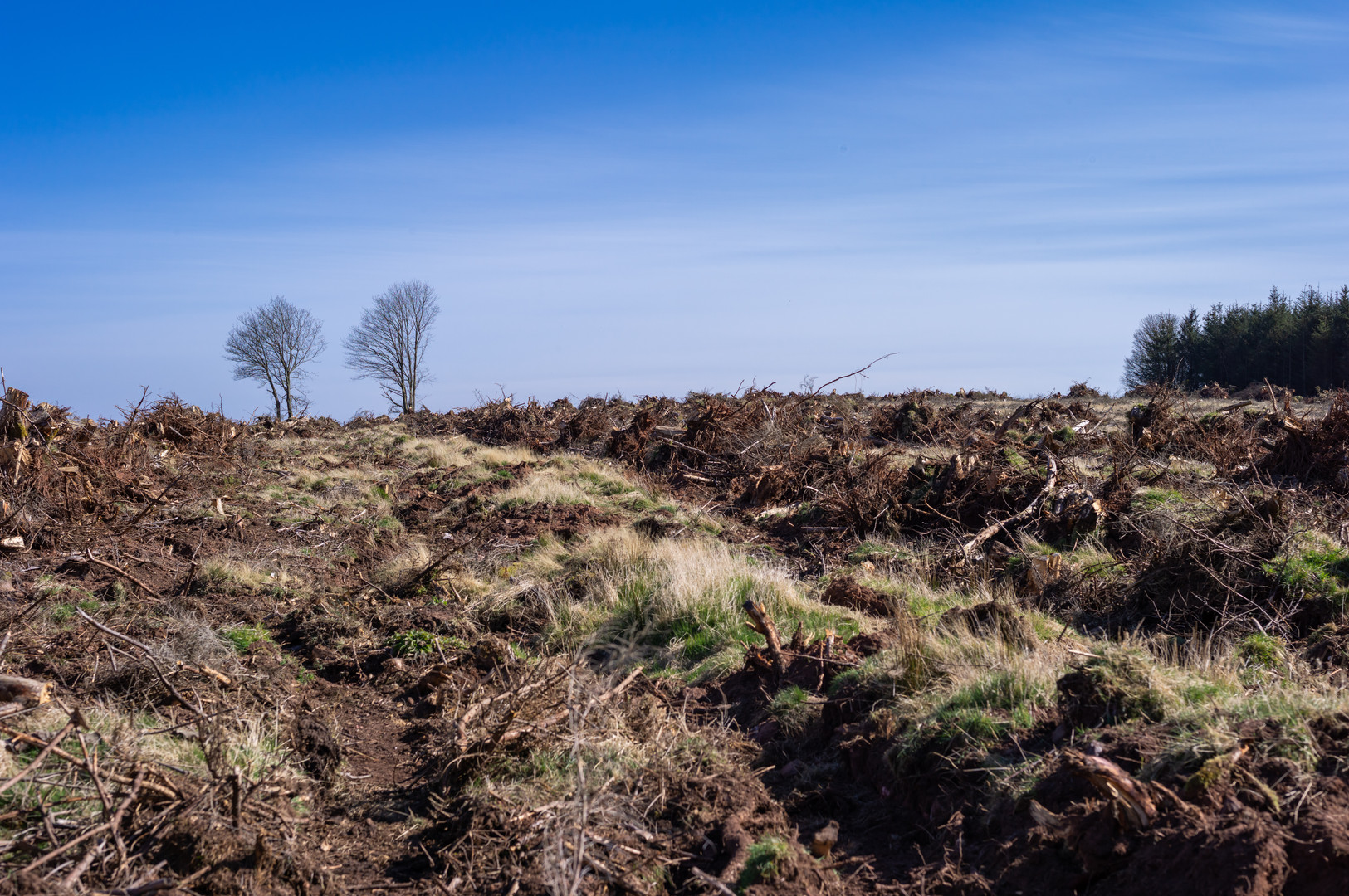 Wood clearing Fasque-13.jpg