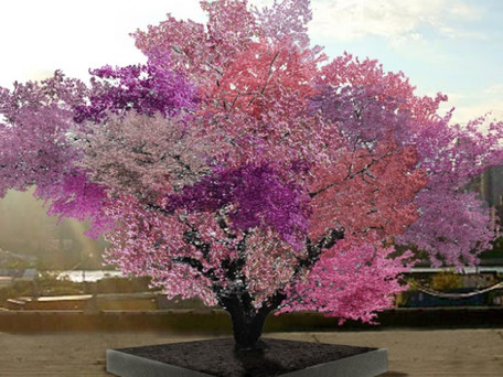 The Tree of 40 Fruit