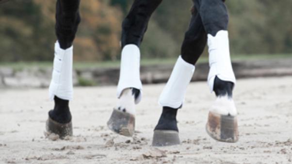 Catago Dressage Boots