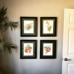 Botanical prints from overseas