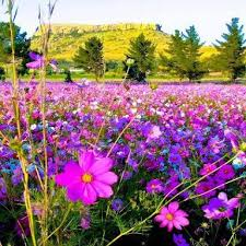 Beautiful fields of flowers