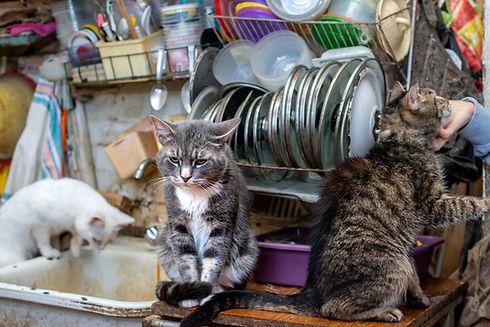 Cat shelter. Sad grey cat sitting on the