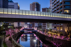 Meguro River Illuminations. Meguro/Osaki, Tokyo.