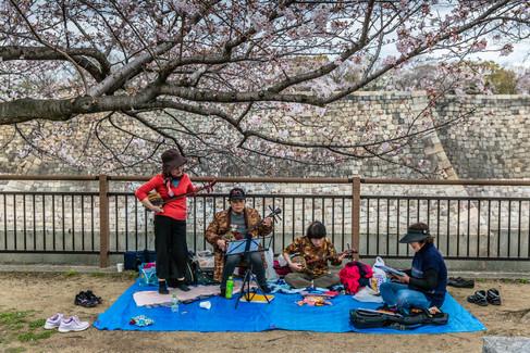 Osaka Castle Park. Osaka, Japan.