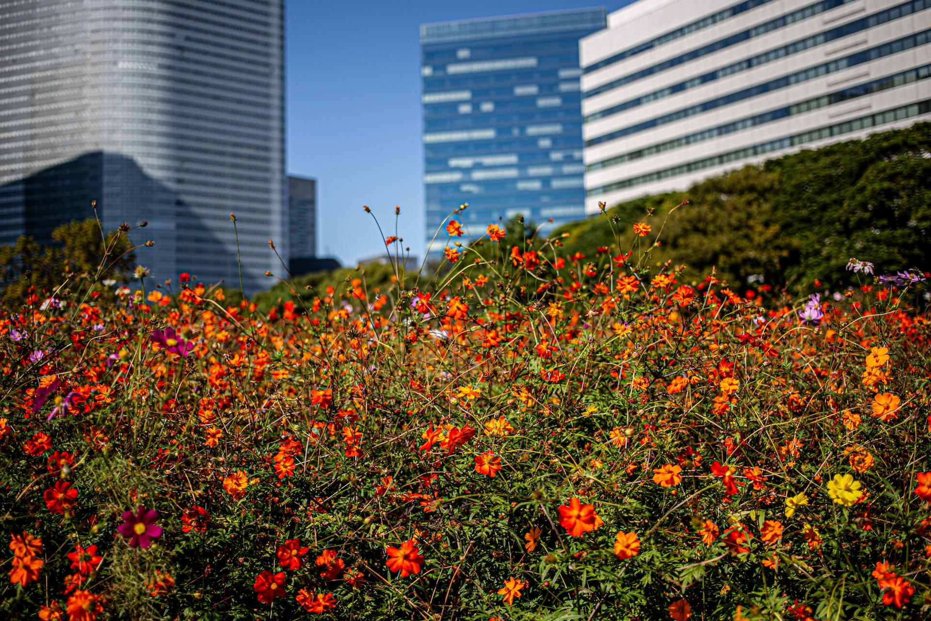 Hamarikyu Gardens. Chuo, Tokyo.