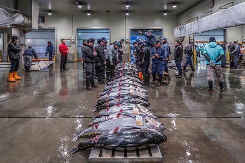 Tuna auction, Osaka City Municipal Central Wholesale Market. Osaka, Japan.