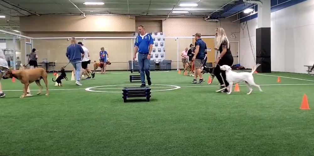 Dallas TX Dog Training Group Class