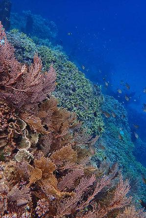 Samarengga. Sulawesi