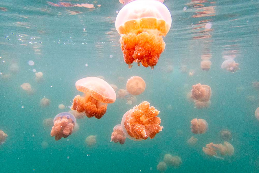 Jelly Fish Lake, Togean Islands