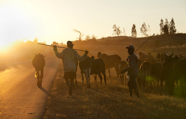 Herders, Madagascar
