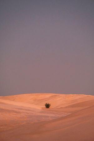 dunes%202_edited.jpg